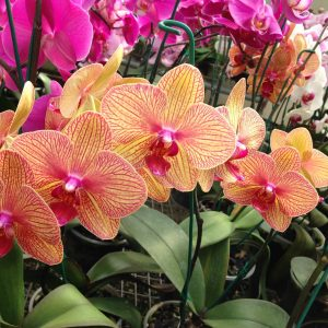 Feria de Orquídeas