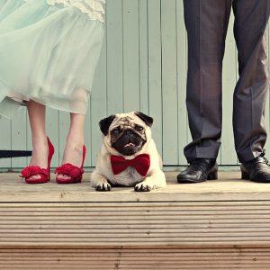 ¿Cómo incluir a tu mascota en la celebración de tu matrimonio?