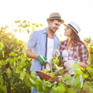 Aventura en pareja: viñedos increíbles para visitar de a dos