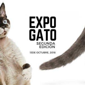 Expo Gato